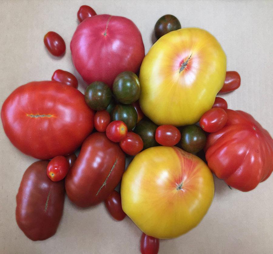 Toigo Farms Organic Tomato