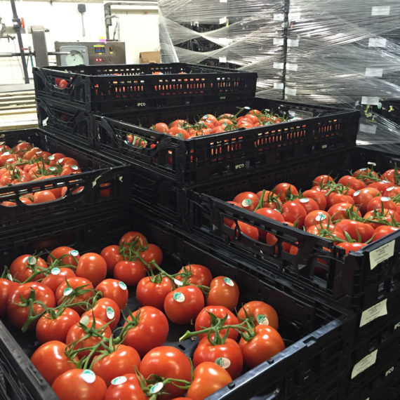 tomatoes-in-crates